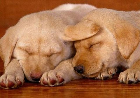 puppies-sleeping1