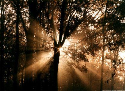sunrise_woods